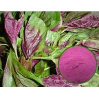 Best Water-soluble edible amaranth haematochrome extracted from A.mangstanusl L dark red pigment wholesale