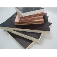 Best hardwood film faced plywood wholesale