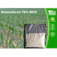 Best Nicosulfuron 75% WDG Selective Herbicide For Maize Annual Grass Control wholesale
