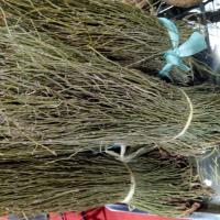 Buy cheap Dried EPHEDRA HERB segments natural Ephedrae herba whole parts for traditional from wholesalers