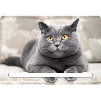Best Custom 7x11cm Lovely Cats 3d Fridge Magnets With Notepad For House Refrigerator wholesale