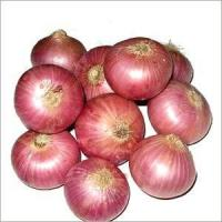 Best 8cm Fresh Onion Without Pesticide Residue , Including Vitamins And Minerals wholesale