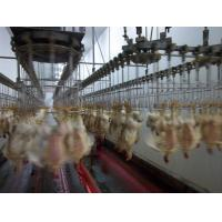 Best poultry slaughter equipment wholesale