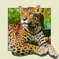 Best Custom Lenticular Image Printing For Gift , 5d Animal Collage Poster 15.7x15.7 Inches wholesale
