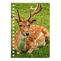 Cheap Eco-friendly PET 3D Lenticular Notebook , Custom Print A5 Exercise Book for sale