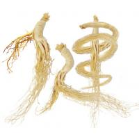 Best Ginseng Root Polysaccharides wholesale