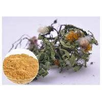 Best Flavones Dandelion Root Extract Powder For Diuretic Whole Herb Extraction wholesale
