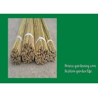 Best 6 Foot Strong Long Bamboo Garden Stakes Nature Straight 6 - 8mm wholesale