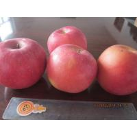 Buy cheap 2013 New fresh red fuji apple, organic apple green plant, small size from wholesalers