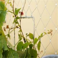 Best Plant Climbing Prop Stainless Steel Cable Webnet / Green Wall wholesale