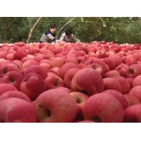 Buy cheap 2013 New Chinese fresh red fuji apple, organic apple green plant, big size from wholesalers