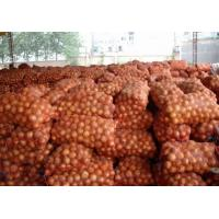 Best Mesh Bagged Natural Fresh Onion Including Vitamins And Minerals No Budding wholesale