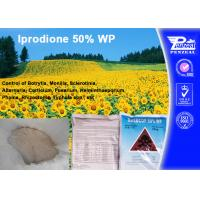 Best Systemic Fungicide For Apple Trees / Berry Fruit , Iprodione 50% WP wholesale