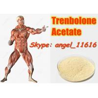 Best 10161-34-9 Tren Acetate Trenbolone Powder For Fitness / Muscle Building Steroids wholesale