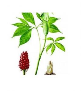 Best RHIZOMA ARISAEMATIS Arisaema heterophyllum Blume dried bulbs Arisaema erubescens(Wall.)Schott roots wholesale
