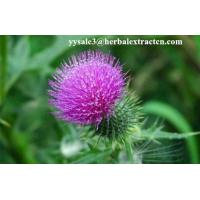 China Milk Thistle Extract  Acetone on sale