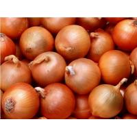 Best Chinese Natural Fresh Onion 30mm - 50mm With ISO , HACCP , FDA wholesale