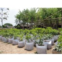 Best Fashionable Design  Plant Grow Bags 0.1 - 3.5mm Thickness Optional Color wholesale