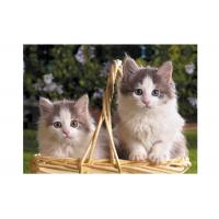 Cheap Cartoon 3D Lenticular Pictures PET for Kid's Room Decoration for sale