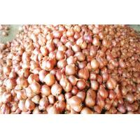 Best Non-Peeled Fresh Red Asian Shallot Contains Fibre , Anti-Inflammatory wholesale