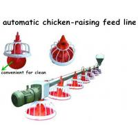 China automatic chicken feeding system on sale