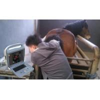 Quality Ultrasound diagnostic system color doppler EW-C5V with Convex and Rectal probe for large animals wholesale