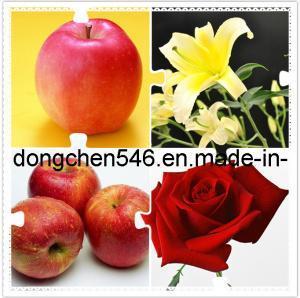 Best 1-Mcp (1-Methylcyclopropene) for Keeping Fruits Fresh wholesale