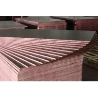 Best constrution plywood manufacture wholesale