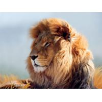China Strong Lion Plastic 3D Print Service Animal Designs 420mm × 594mm on sale