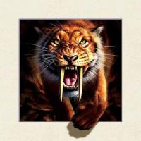 Best Strong 5d Deep Effect Lenticular Photo Printing 40x40cm Picture Tiger / Wolf wholesale
