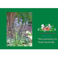 Best Adjustable Metal Garden Plant Supports With 3 Stakes And 2 Rings wholesale