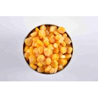 Best OEM Grade A Canned Whole Kernel Sweet Corn Water Preservation Process wholesale