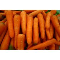 Buy cheap Fresh carrot, frozen carrot, China vegetable, yellow big size,carota, organic from wholesalers