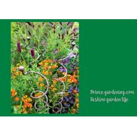 Best Decorative Mental Garden Plant Stakes / Garden Support Stakes With 3 Spiral Stem wholesale