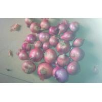 China 2cm - 3cm Red Onion Shallot on sale