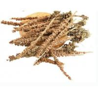 Best Orostachys fimbriata Turcz Berg Fimbriae Orostachys dried whole plant for herb medicine Wa song wholesale