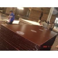 Best 18mm combi film faced plywood with WBP glue wholesale
