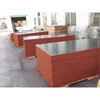 Best Film Faced Decorative Plywood Sheets 2 Times Hot Press High Strength Design wholesale