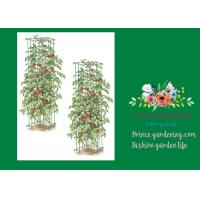 "Best Heavy Duty Metal Square Tomato Cages With 8"" Square Openings wholesale"