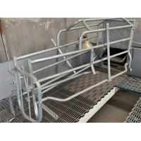 China Curved Edge Design Pig Farrowing Crate Hog Equipment OEM / ODM Available on sale