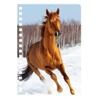 Cheap 45 Sheets 3D PET Cover Lenticular Spiral A5 Notebook With UV Printing for sale