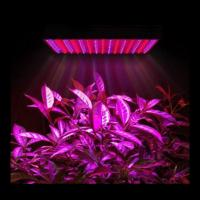 Best Marijuana Full Spectrum LED Grow Lights Dimmable For Growing Plants Indoors wholesale