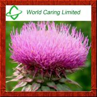 China High Quality Milk Thistle Extract Silymarin 80%,Silybin 30% HPLC on sale