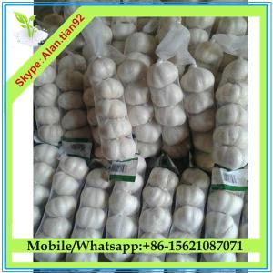 Buy cheap Chinese Natural garlic price, Fresh natural garlic from wholesalers