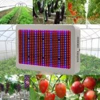 Best High Tech Dimmable LED Grow Lights Indoor With 50~60Hz Frequency wholesale