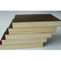 Best gloosy brown colour film faced plywood wholesale