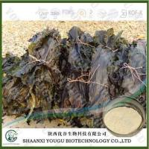 Best China Brown Seaweed Extract Fucoidan 95%, 85%/konbu fukoidan powder/kelp extract fuicodan Supplier wholesale
