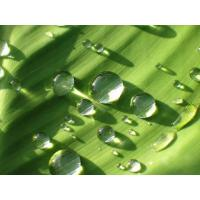 Best The Asian Largest Aloe Vera Raw Materials Manufacturer wholesale
