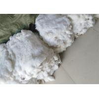 Best Dyed Fluffy Rex Rabbit Fur Skins Heavy Density 30*40cm With Customized Logo wholesale