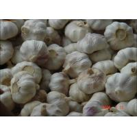 Buy cheap 2016 China New Fresh Garlic Normal or Pure White Exporting to Chittakong, from wholesalers